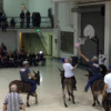 Shriners Put on Donkey Basketball With Hilarious Results