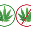 How New Pot Laws Affect You