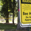 The Bees Are Here To Stay