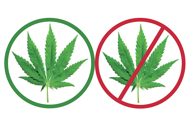 why not to legalize marijuana Why we shouldn't legalize marijuana commentary crime and justice  legalizing marijuana is not the answer rather, sound national drug policy includes international cooperation, research .